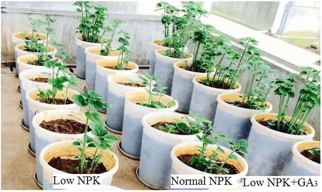 تاثیر کود npk در رشد گیاه