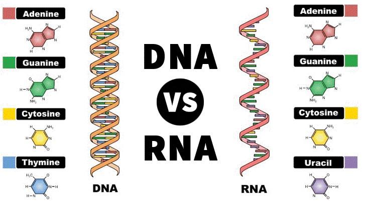 مولکول های زیستی نوعی ترکیب آلی